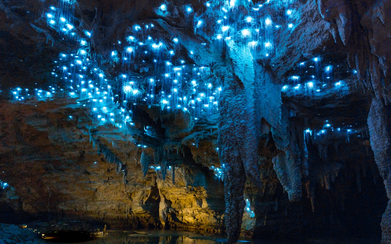 Waitomo Glowworm Cave Tours New Zealand